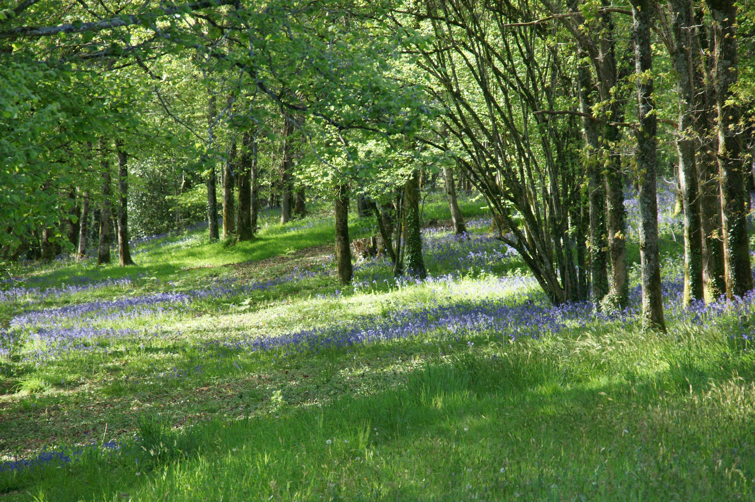 Der Wald unseres ASPAS-Schutzgebiets im Frühling